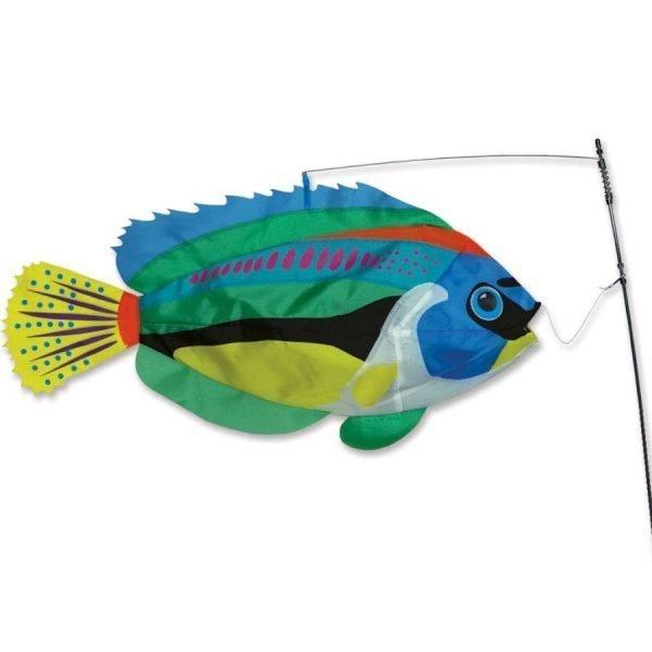 Swimming Fish – Peacock Wrasse